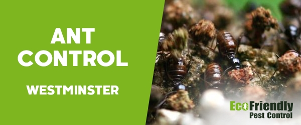 Ant Control Westminster