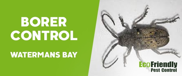 Borer Control  Watermans Bay