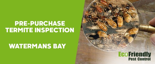 Pre-purchase Termite Inspection  Watermans Bay