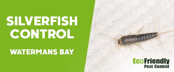 Silverfish Control  Watermans Bay