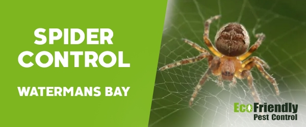 Spider Control  Watermans Bay