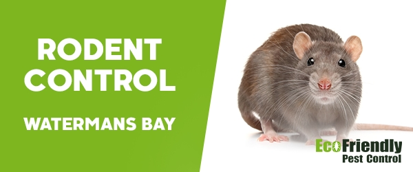 Rodent Treatment  Watermans Bay