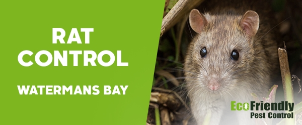 Rat Pest Control  Watermans Bay