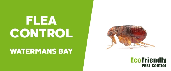Fleas Control  Watermans Bay