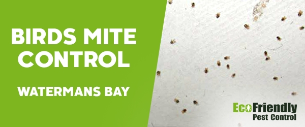 Bird Mite Control  Watermans Bay