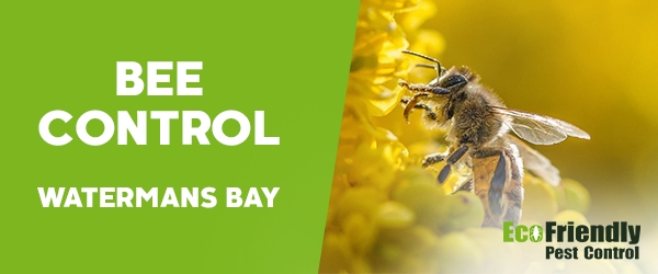 Bee Control  Watermans Bay