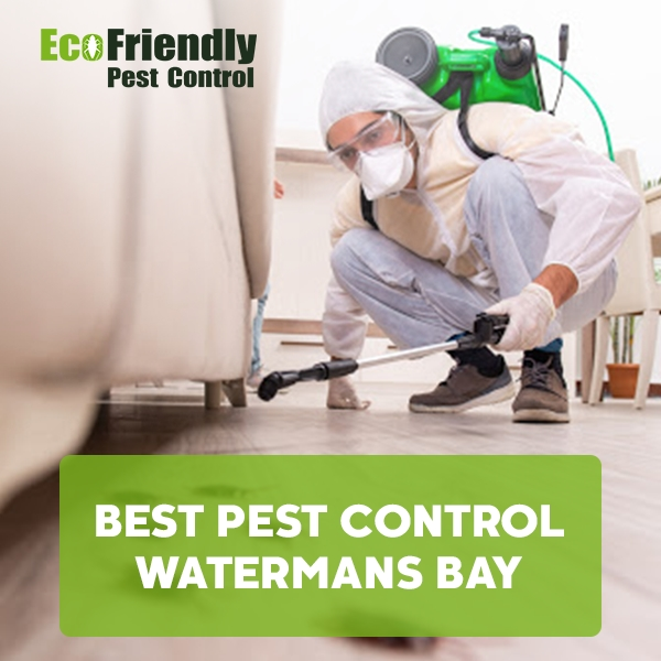 Best Pest Control  Watermans Bay