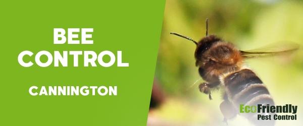 Bee Control  Cannington
