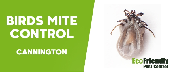 Bird Mite Control  Cannington