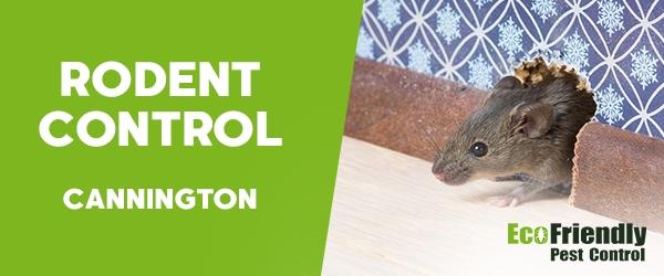 Rodent Treatment  Cannington