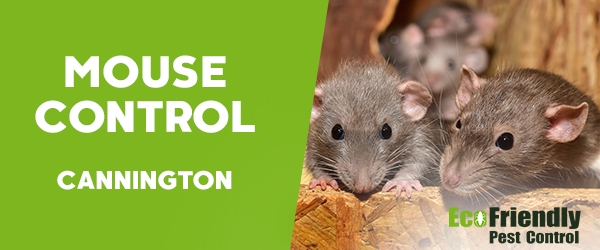 Mouse Control  Cannington