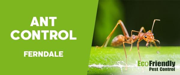 Ant Control  Ferndale