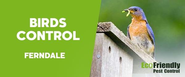 Birds Control  Ferndale