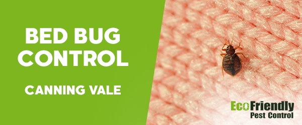 Bed Bug Control Canning Vale