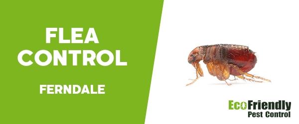 Fleas Control  Ferndale