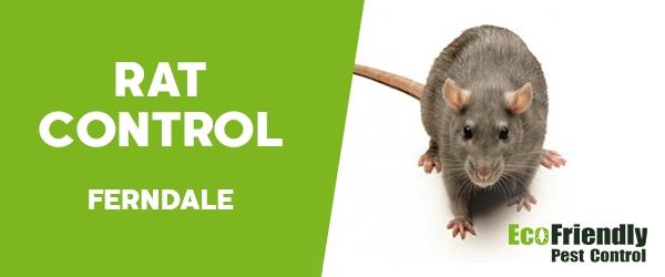 Rat Pest Control  Ferndale