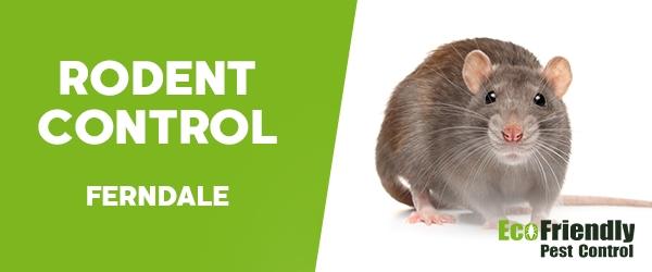 Rodent Treatment  Ferndale