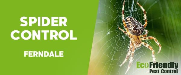 Spider Control  Ferndale