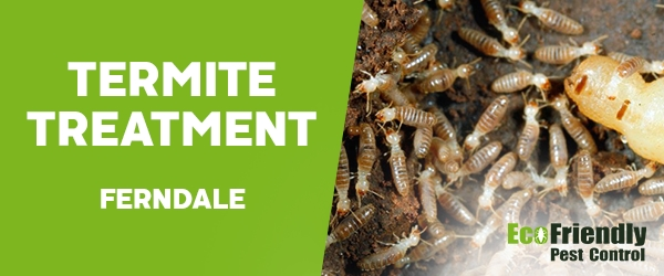 Termite Control  Ferndale