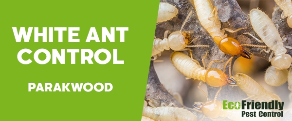 White Ant Control  Parkwood