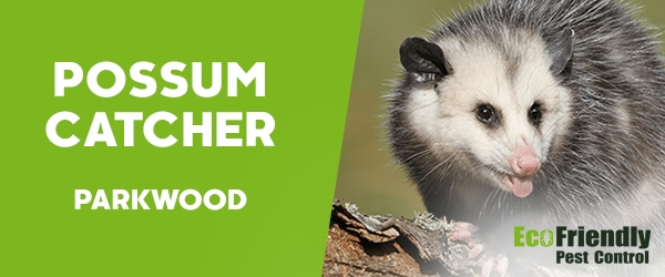 Possum Catcher  Parkwood