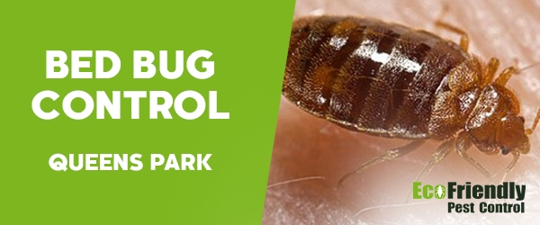 Bed Bug Control  Queens Park