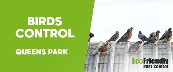 Birds Control  Queens Park