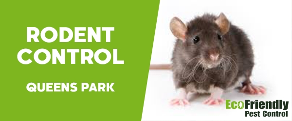 Rodent Treatment  Queens Park