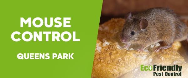 Mouse Control  Queens Park