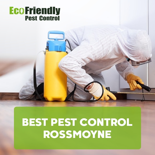 Best Pest Control  Rossmoyne