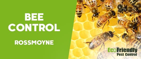 Bee Control  Rossmoyne