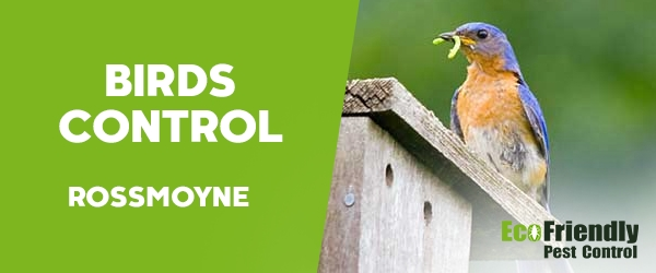 Birds Control  Rossmoyne