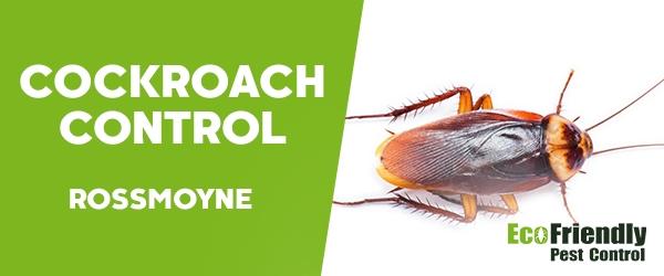 Cockroach Control  Rossmoyne