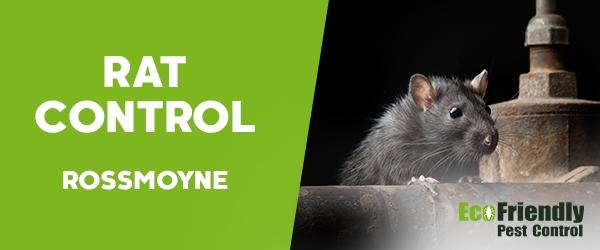 Rat Pest Control  Rossmoyne