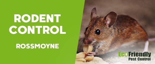 Rodent Treatment  Rossmoyne