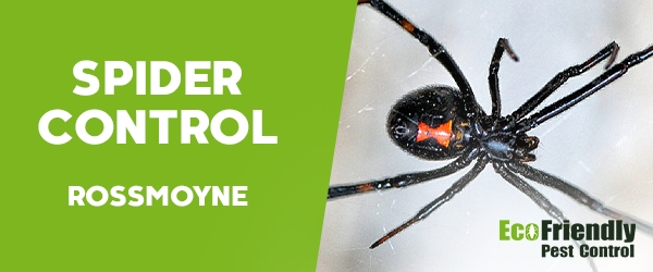 Spider Control  Rossmoyne