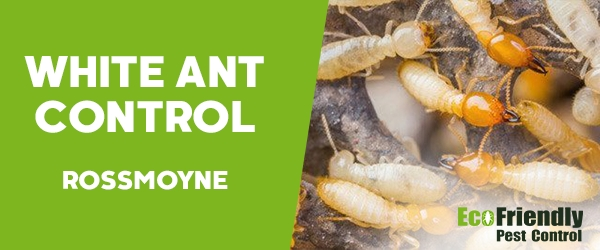 White Ant Control  Rossmoyne