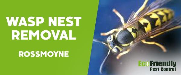 Wasp Nest Remvoal  Rossmoyne