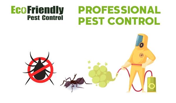 Pest Control Riverton