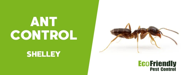 Ant Control Shelley