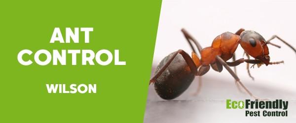 Ant Control  Wilson