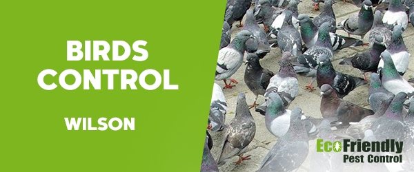 Birds Control  Wilson