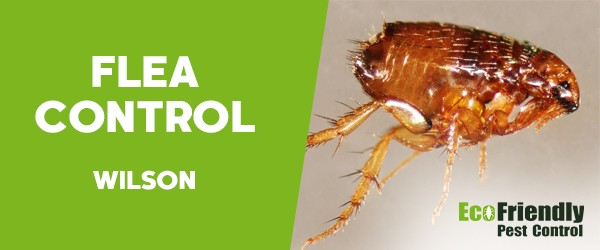 Fleas Control  Wilson