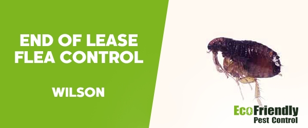 End of Lease Flea Control  Wilson