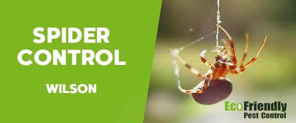 Spider Control  Wilson