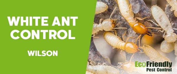 White Ant Control  Wilson