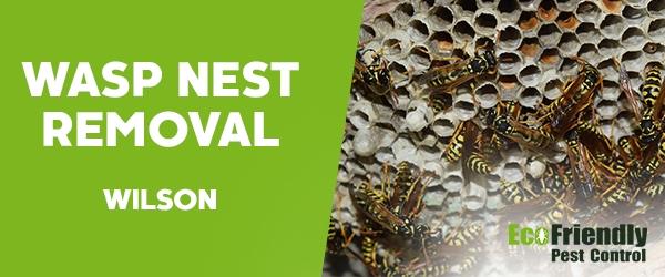 Wasp Nest Remvoal  Wilson