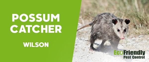 Possum Catcher  Wilson