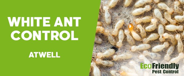 White Ant Control  Atwell