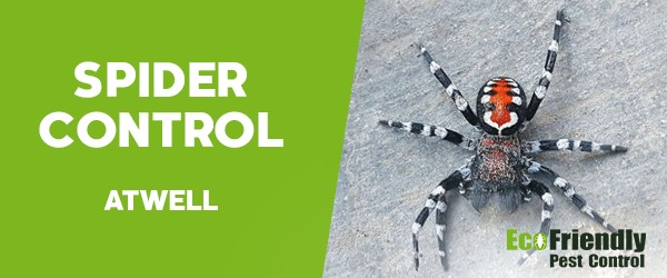Spider Control  Atwell